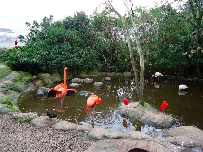 Birds of Eden (C) Darryn McBain