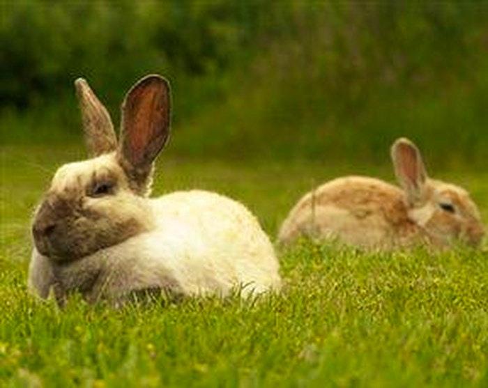 Bunnies in Benoni Bunny park