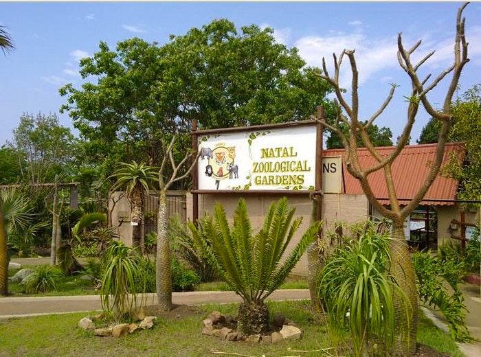 Natal Zoological Gardens (C) Nat Zoo
