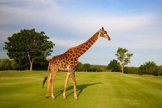 Hans Merensky golf course (TravelGround)