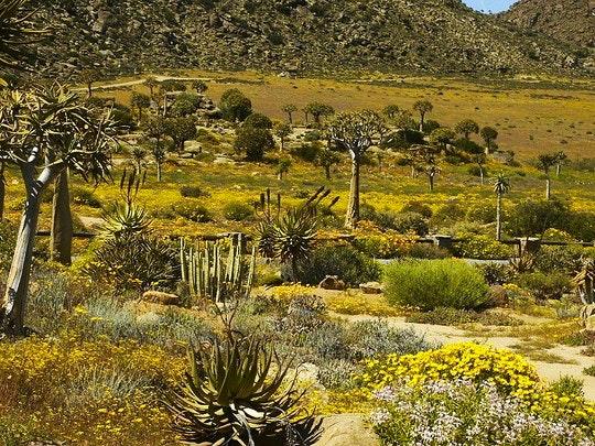 Namaqualand (Wikipedia)