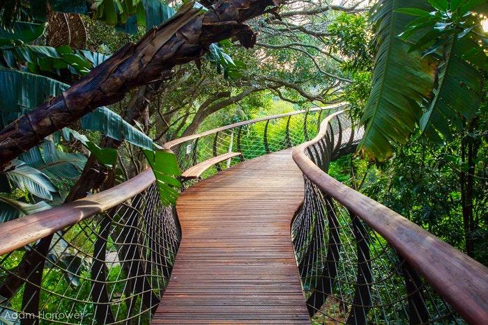 Kirstenbosch Gardens by Adam Harrower