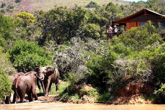 Addo Elephant Back Safaris & Lodge (TravelGround)