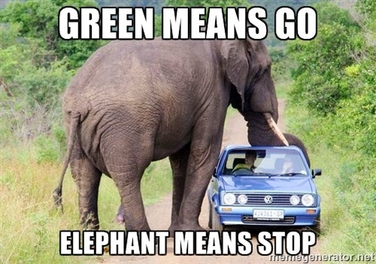 Elephant means stop