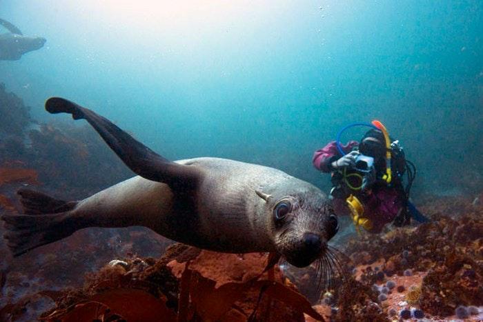 Seals (PiscesDivers)