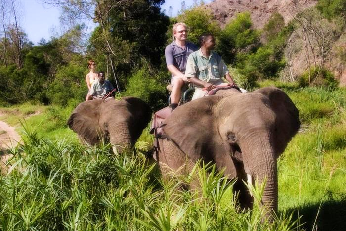 Elephant back rides at Botlierskop Private Nature Reserve (C) TravelGround