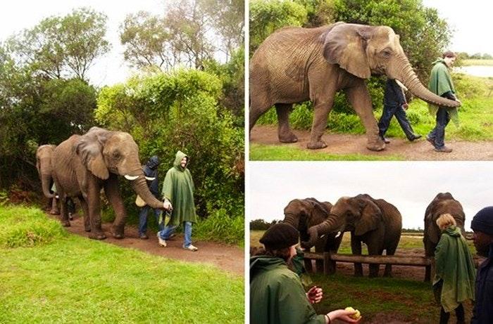 Elephant sanctuary collage (Desiree Haakonsen)