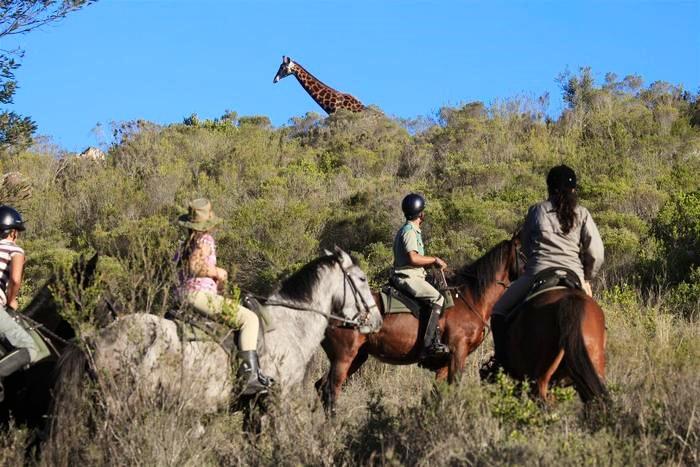Horseback safari at Botlierskop Private Nature Reserve (C) TravelGround