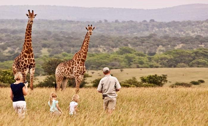 Rhino River Lodge giraffe guided walk (C) TravelGround