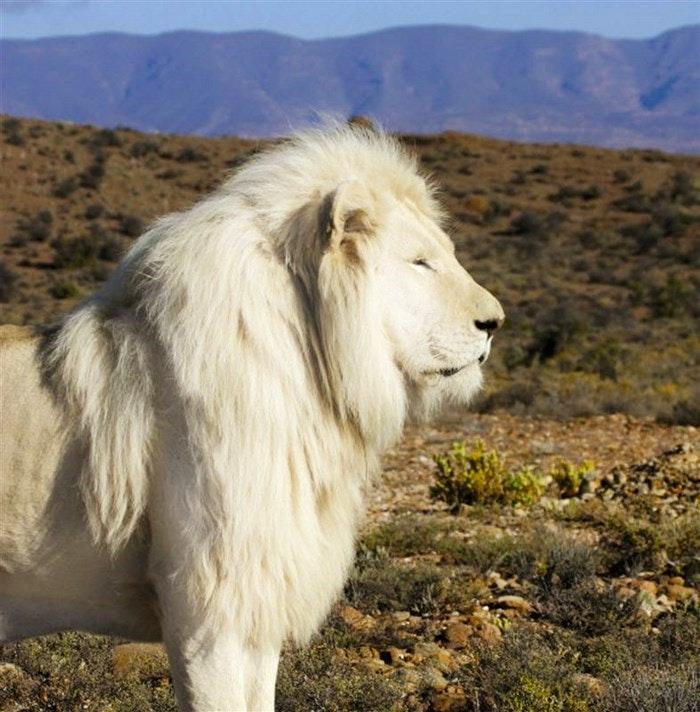 Spotting wildlife is bucket list worthy at Sanbona Wildlife Reserve (C) TravelGround