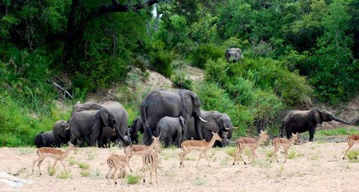 Wildlife seen at Eden@Marloth (C) TravelGround