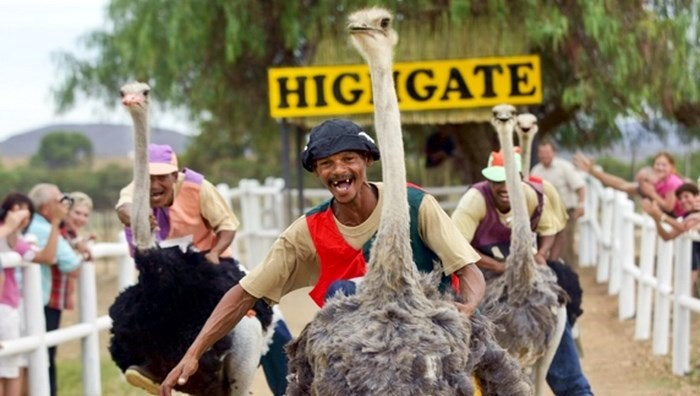 highgate-ostrich-show-farm-traditional-tour-overview