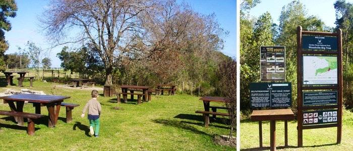 Woodville-Big-Tree-picnic-area-by-Desiree-Haakonsen