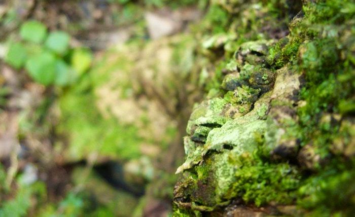 details-forest-by-Desiree-Haakonsen