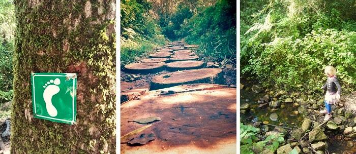forest-walk-by-Desiree-Haakonsen