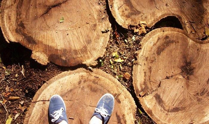 stepping-trunks-by-Desiree-Haakonsen