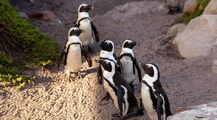 Penguin colonies in marine reserves close by.