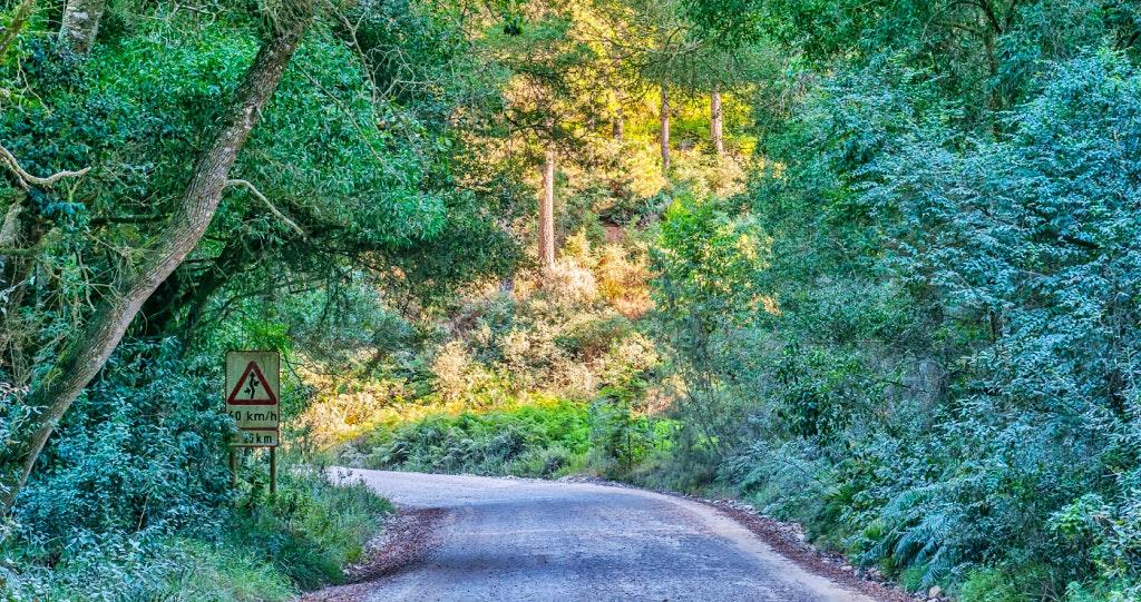 Knysna Road to Diepwalle