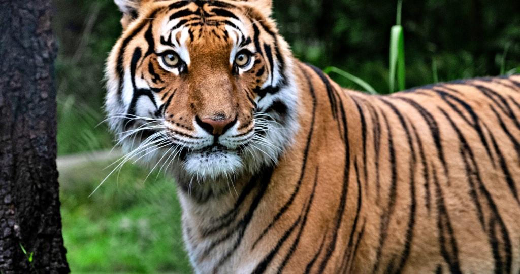 Jukani Wildlife Reserve