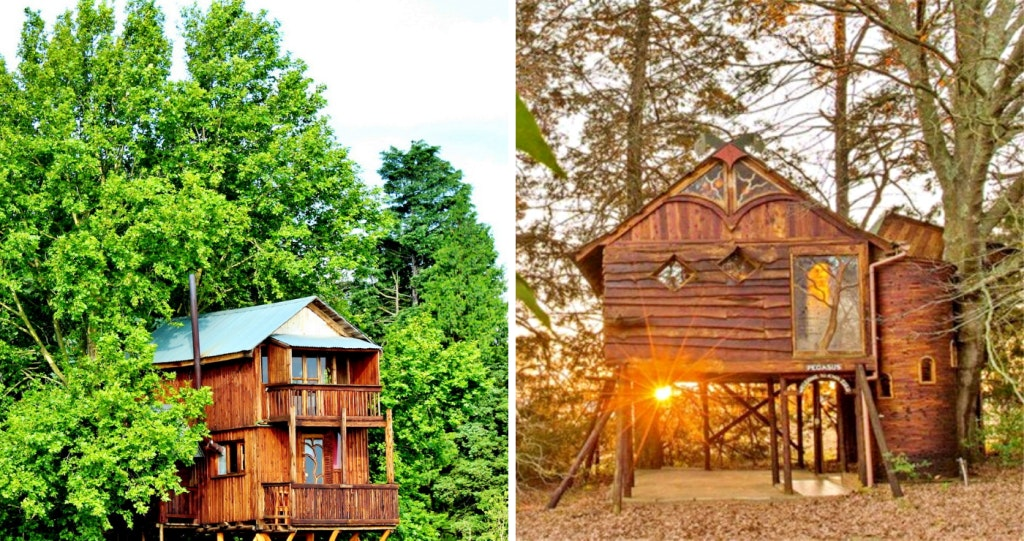 Sycamore Avenue Treehouse Accommodation
