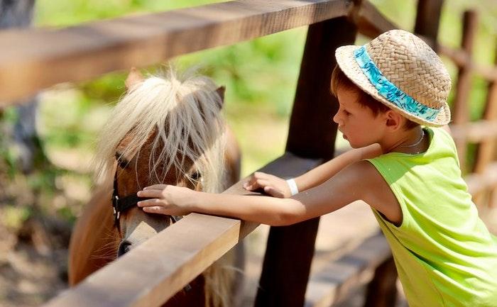 Horse and pony rides