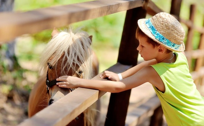 Horse and pony rides