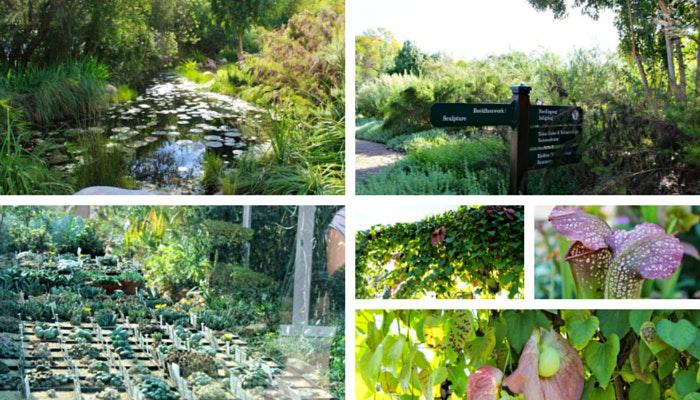 Botanical Gardens of Stellies 3