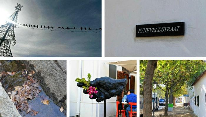 Stellies snapshots by Roseanna McBain (C) TravelGround