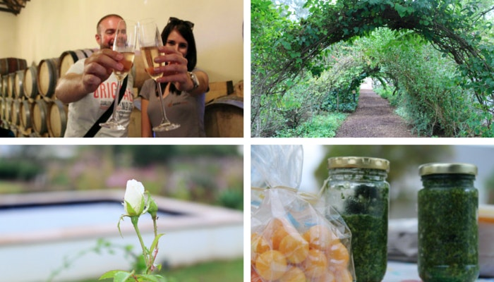 McGregor Beauty - Darren Colmbrink and Ankia, Temenos archway, rose at Kite House, Olive Pesto from McGregor Market. By Roseanna McBain (C) TravelGround